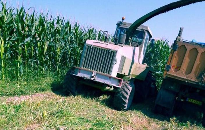 تصویر گزارش| «کشاورزی»، ناجی اقتصاد|کاشت ذرت علوفه ای در مدخل کویر